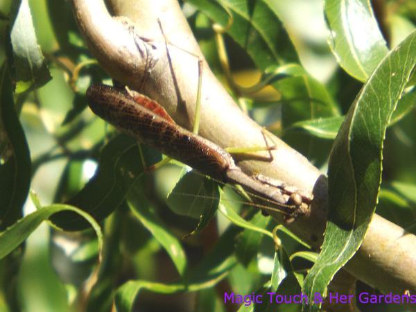 Christ, that's asian praying mantis humming birds this