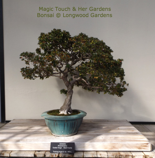 Bonsai Longwood Gardens Magic Touch Her Gardens