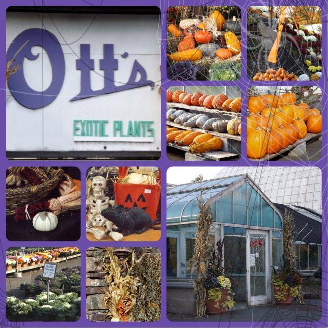 Ott's Exotics