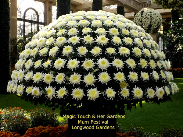 Dome of Mums @ Longwood Gardens