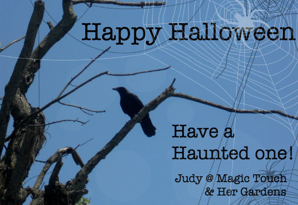 Happy Halloween w:web