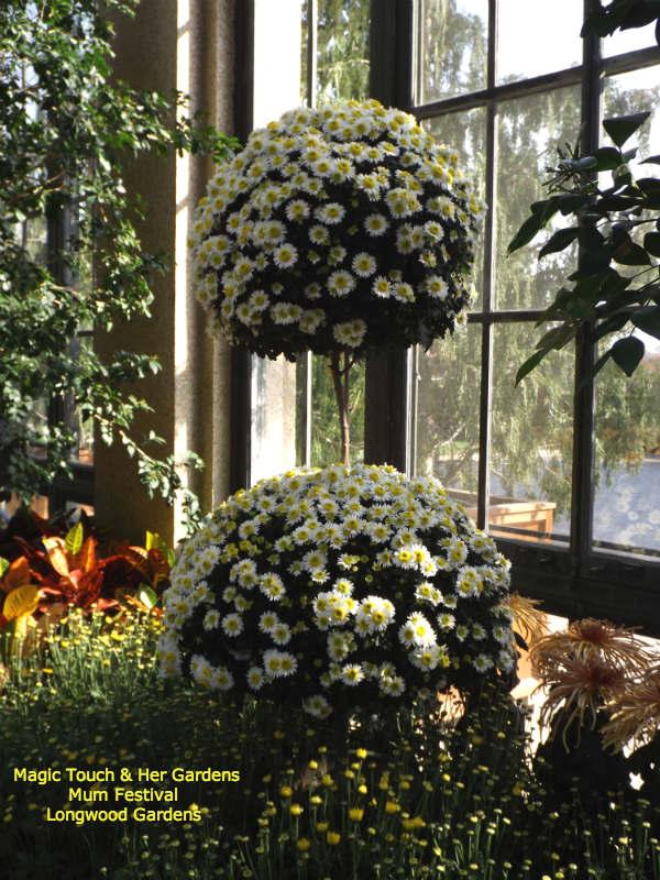 Mum Topiary @ Longwood Gardens