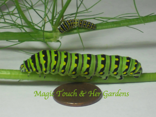 Caterpillar & Penny Magic Touch & Her Gardens