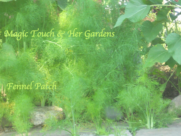 Magic Touch & Her Gardens, Fennel