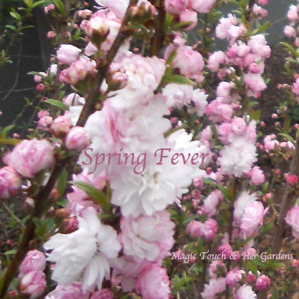 Spring Fever @ Magic Touch & Her Gardens
