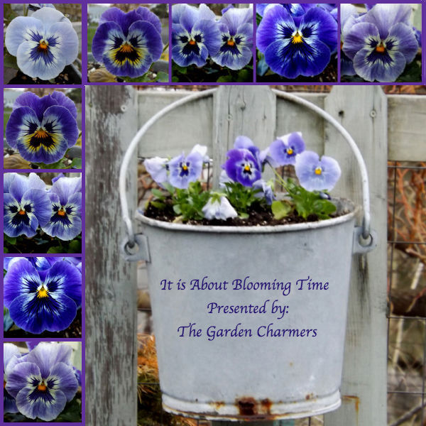 IT IS ABOUT BLOOMING TIME Magic Touch & Her Gardens