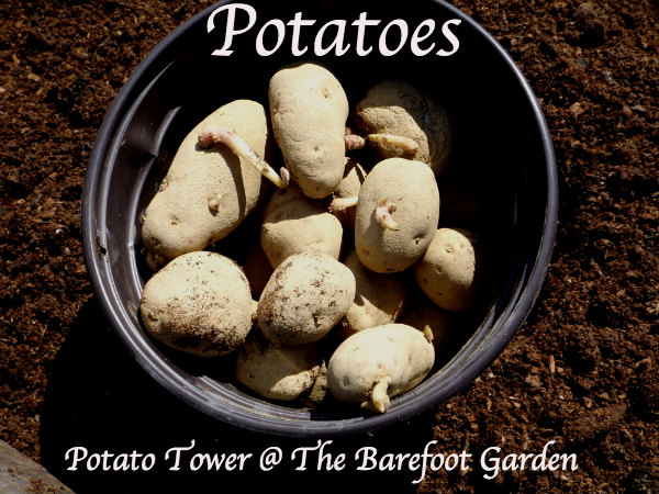 Potato Tower @ The Barefoot Garden