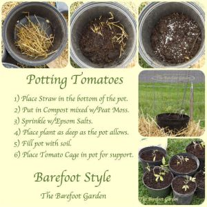 Ran out of room? Have no room? Potted Tomatoes...Barefoot Style. The Barefoot Garden