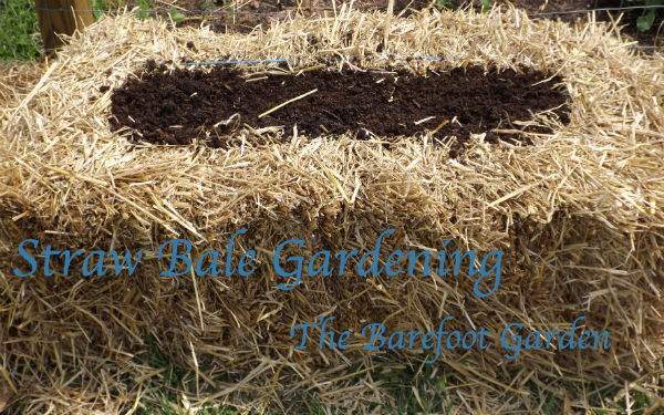 Straw Bale Gardening At The Barefoot Garden
