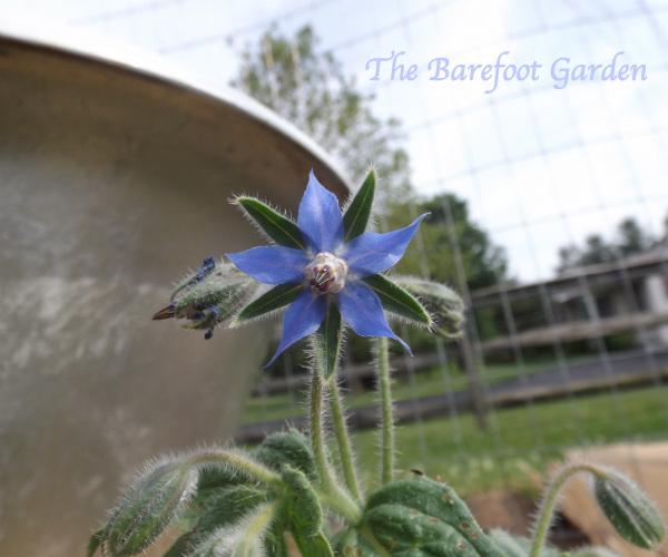 *Update* The Barefoot Garden