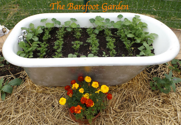 *Update* The Barefoot Garden...Come watch us grow.
