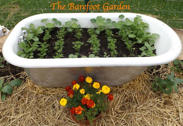 *Update* The Barefoot Garden...Come watch us grow.