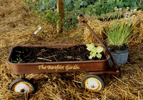 Container Gardening, Barefoot Style