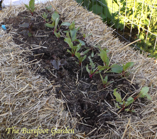 Straw Bale Gardening, Container Gardening, Barefoot Style
