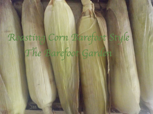 Roasting Corn Barefoot Style: The Barefoot Garden