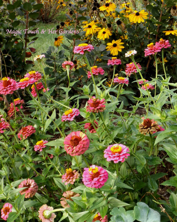 September Surprise Magic Touch & Her Gardens