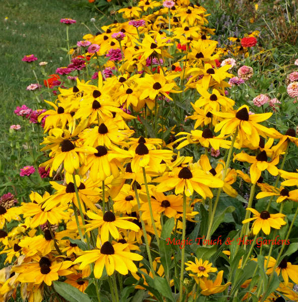September Surprise Magic Touch & Her Gardens